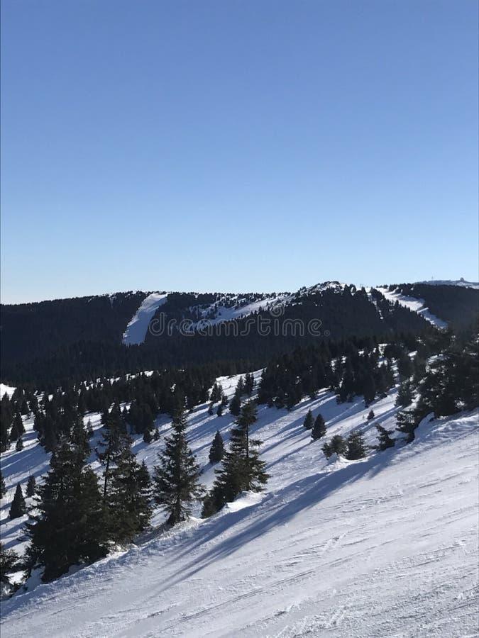 Ciel d'arbres de neige photographie stock