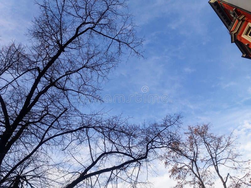 Ciel d'hiver avec les arbres nus à Berlin image stock