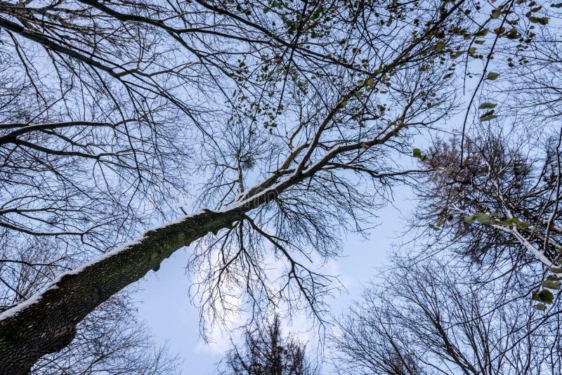 Ciel d'hiver dans des branches d'arbre photographie stock