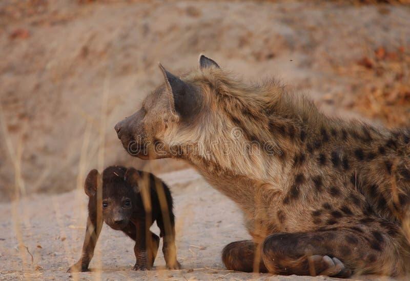Ciel d'hyène photo libre de droits