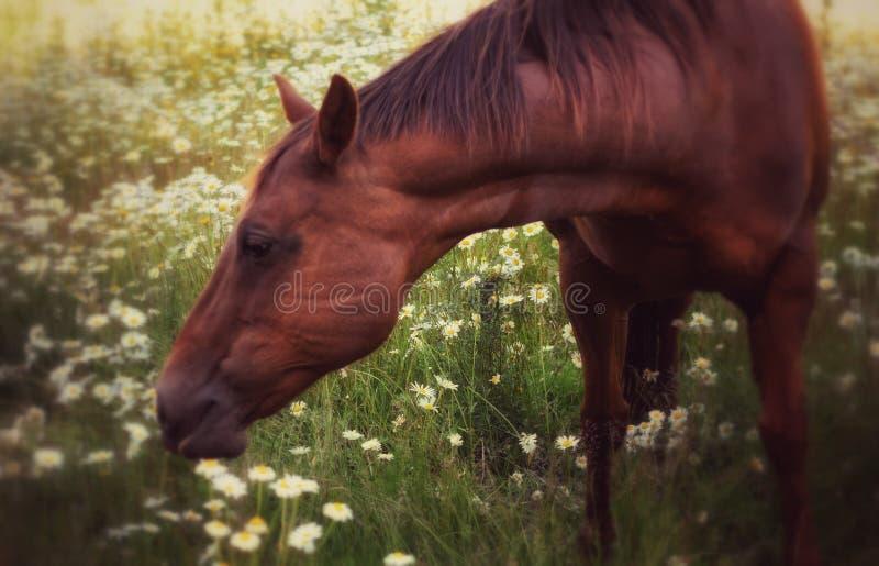 Ciel dans un domaine de cheval photo libre de droits