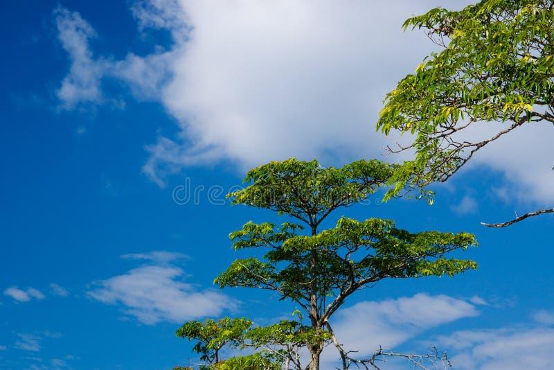 Ciel de côte de mer de Langkawi photos stock
