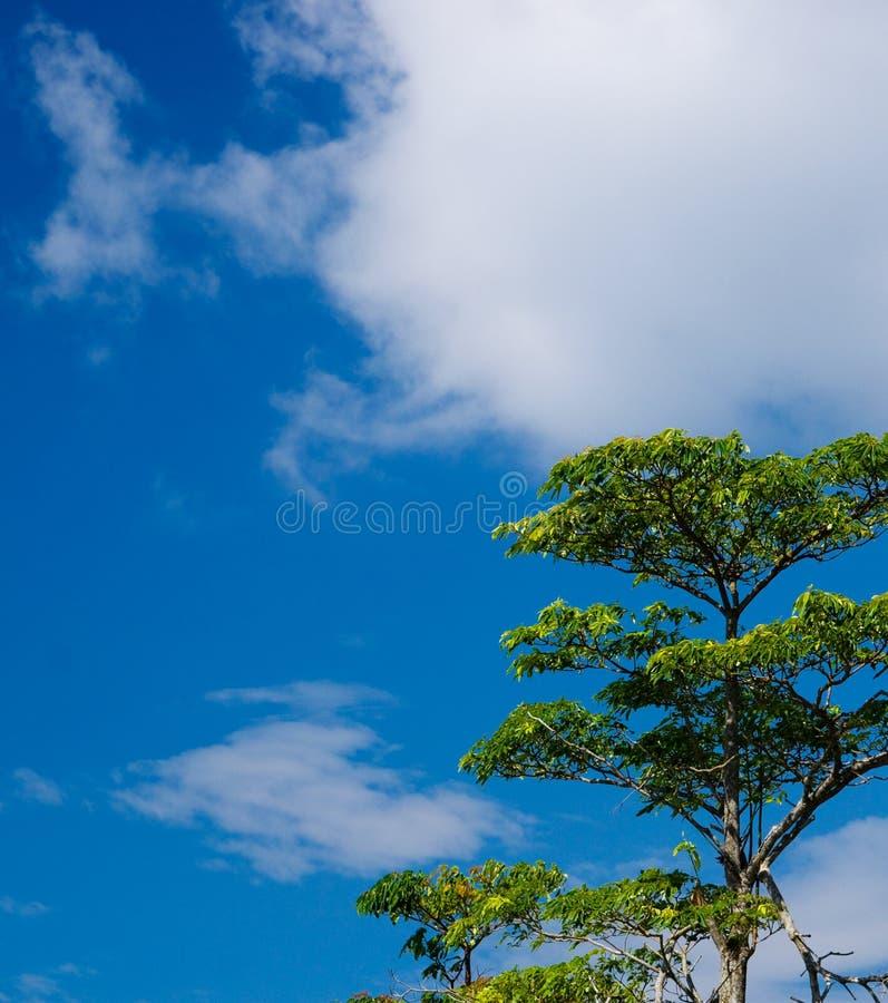 Ciel de côte de mer de Langkawi image libre de droits