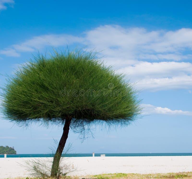 Ciel de côte de mer de Langkawi photo libre de droits