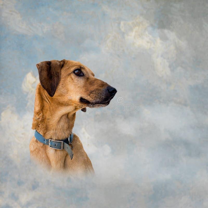 Ciel de chien Chien métis de Brown au-dessus de fond artistique de ciel Conce de ciel d'animal familier photos libres de droits