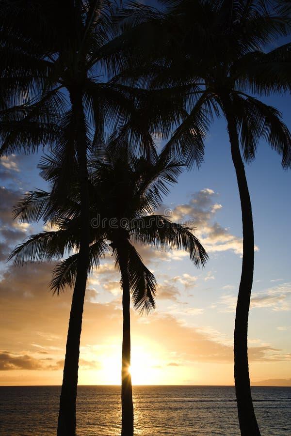 Ciel de coucher du soleil encadré par des paumes. image libre de droits