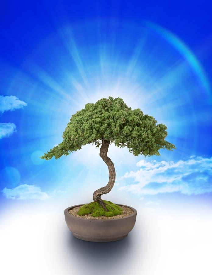 Ciel de la connaissance d'arbre de bonzaies image stock