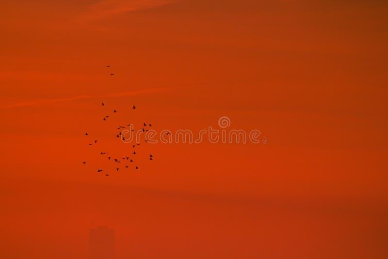 Ciel de lever de soleil de matin avec des oiseaux de vol, fond photo stock