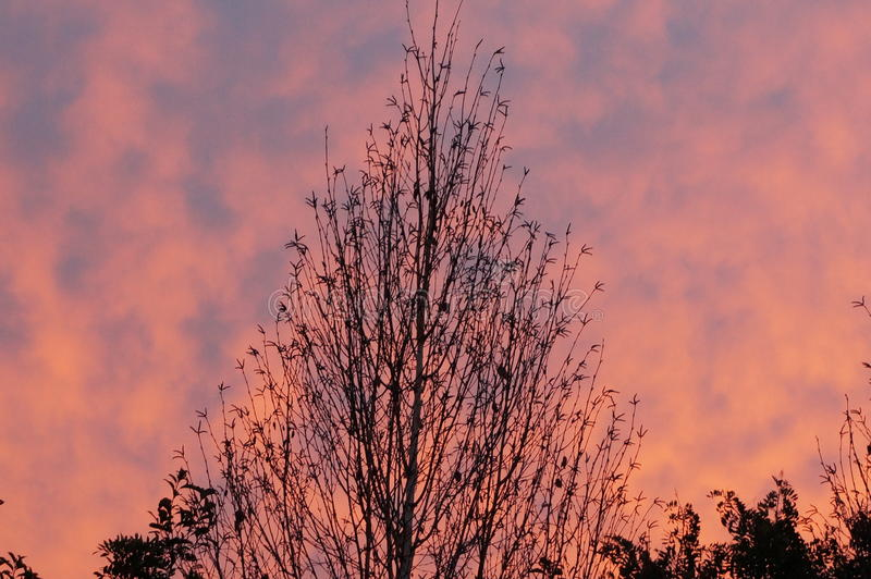 Ciel de matin photos stock