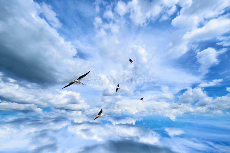 Ciel de nuage photo stock