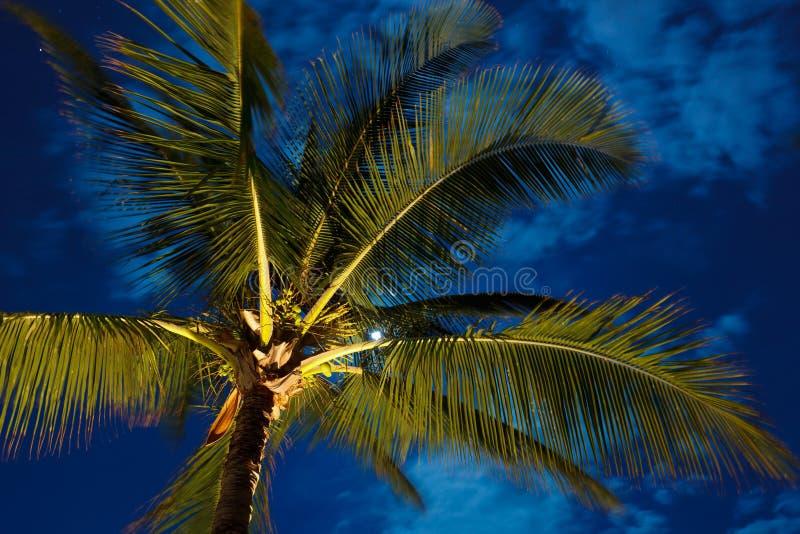 Ciel de nuit tropical images stock