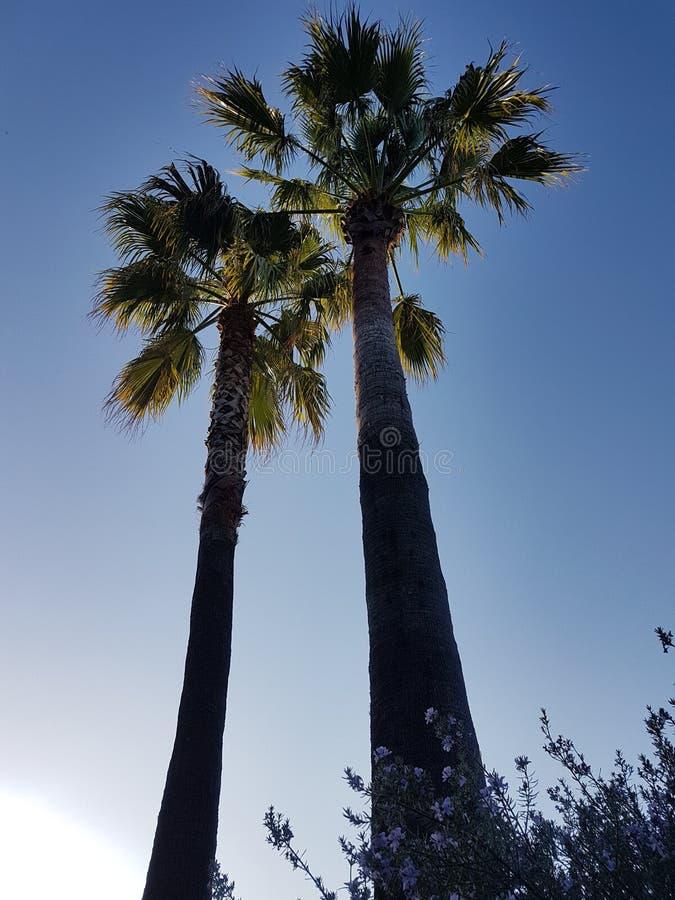 Ciel de palmiers images stock