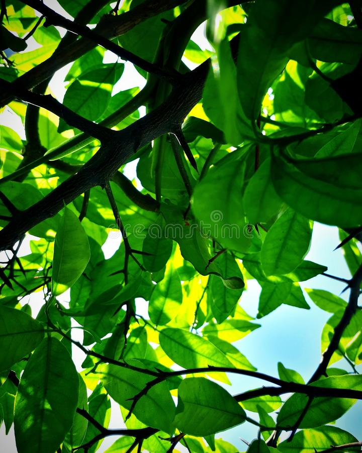 Ciel de plantes vertes images stock