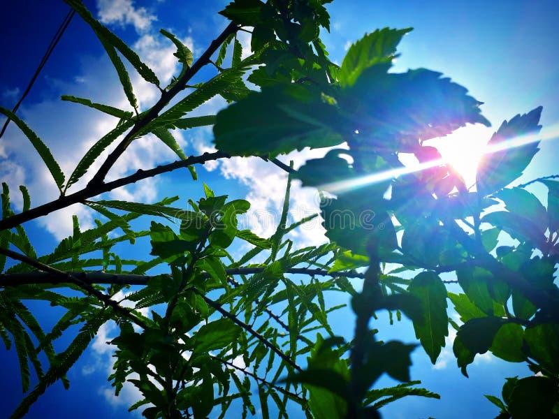 Ciel de plantes vertes photos libres de droits