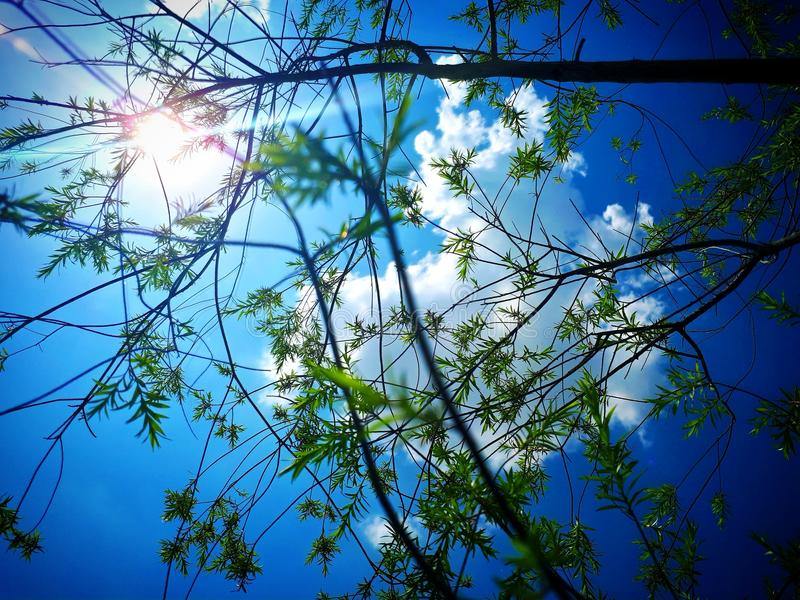 Ciel de plantes vertes photo stock