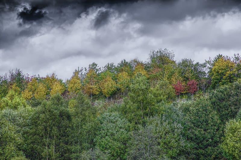 Ciel dramatique au-dessus de région boisée d'automne images stock