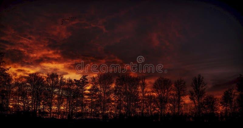 Ciel du feu brûlant au-dessus d'un Forrest image stock