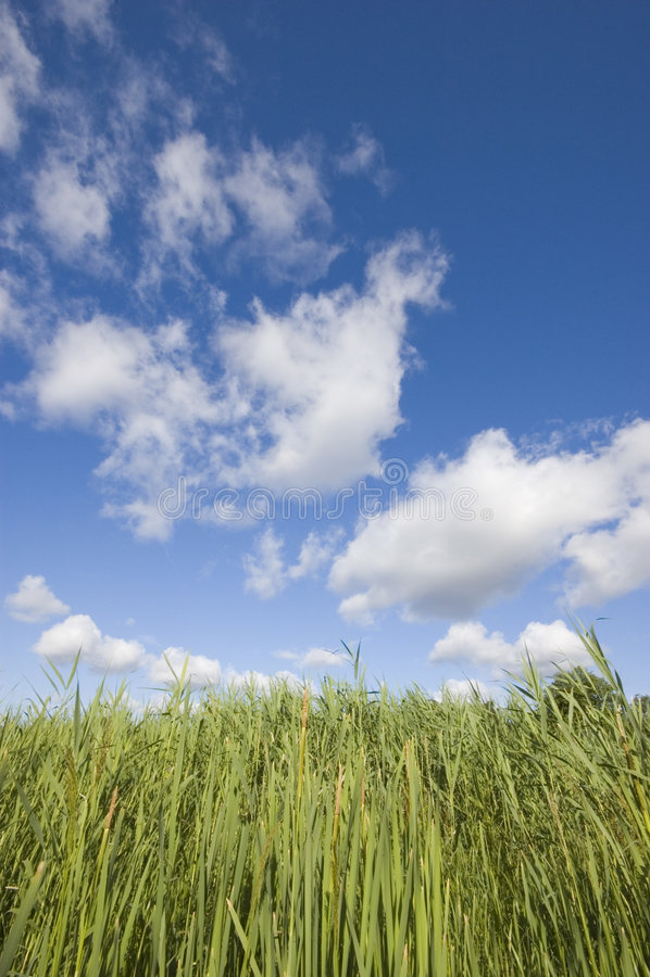 Ciel ensoleillé bleu d'été image libre de droits