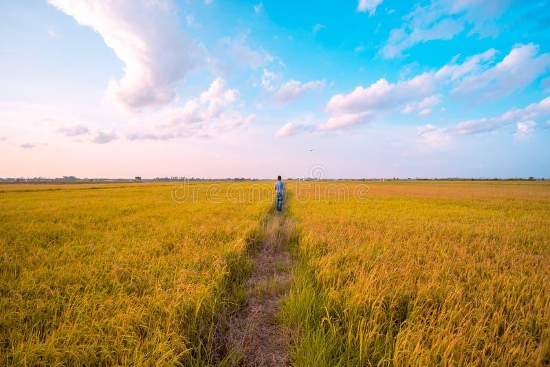 Ciel et champ horizontaux droits en dehors de la ville paysage à la campagne photos stock