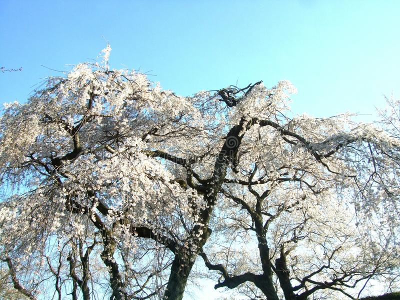 Ciel et fleur de beauté photos libres de droits