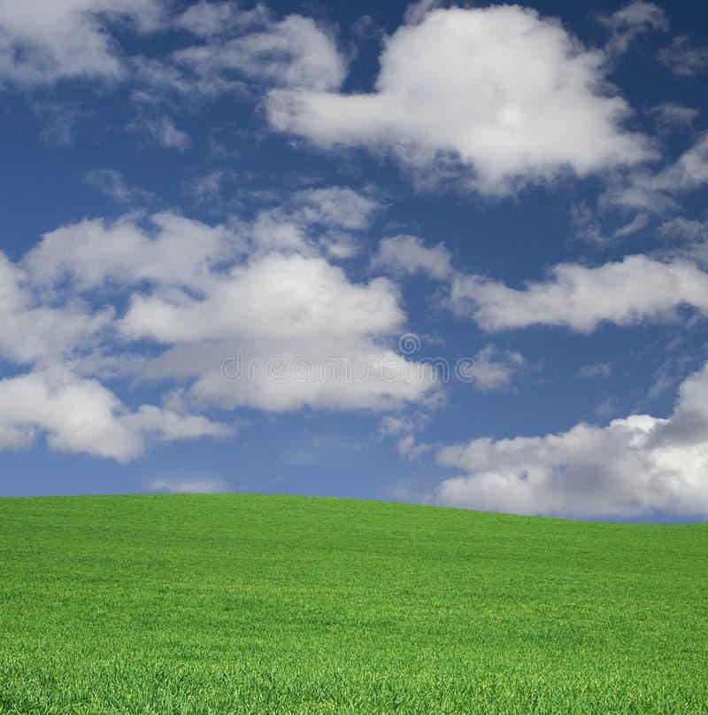 Ciel et herbe idéaux sur une côte photo libre de droits
