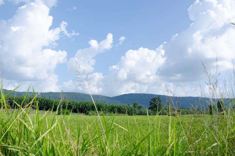 Ciel lumineux, montagnes fertiles et prés verts luxuriants photographie stock