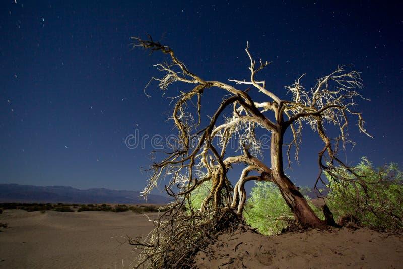 Ciel nocturne étoilé photo libre de droits
