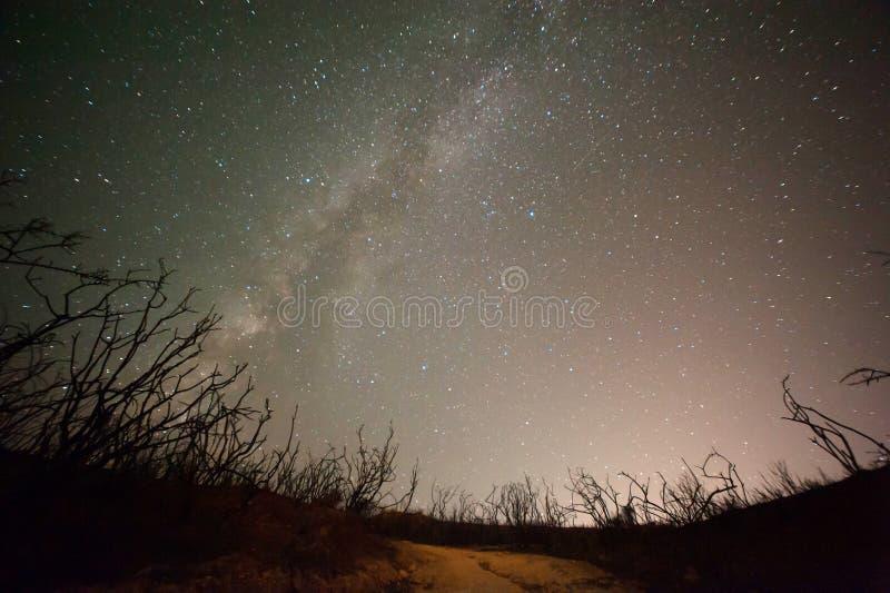 Ciel nocturne avec la galaxie et les arbres photos libres de droits