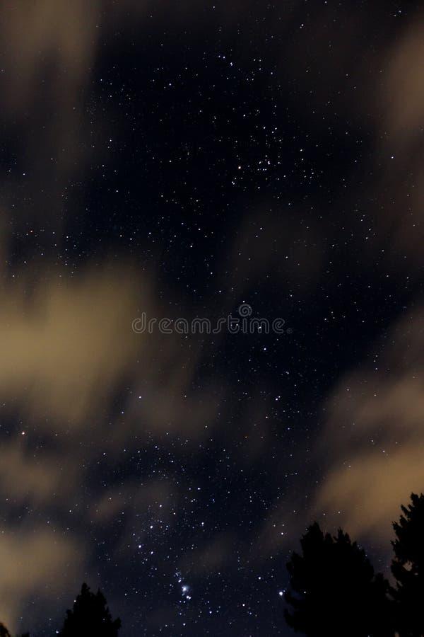 Ciel nocturne avec Orion, nuages et arbres images libres de droits