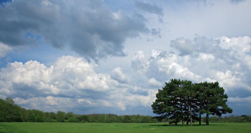 Ciel nuageux au-dessus d'un arbre images libres de droits