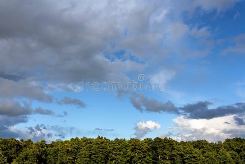 Ciel nuageux au-dessus d'une forêt photographie stock libre de droits