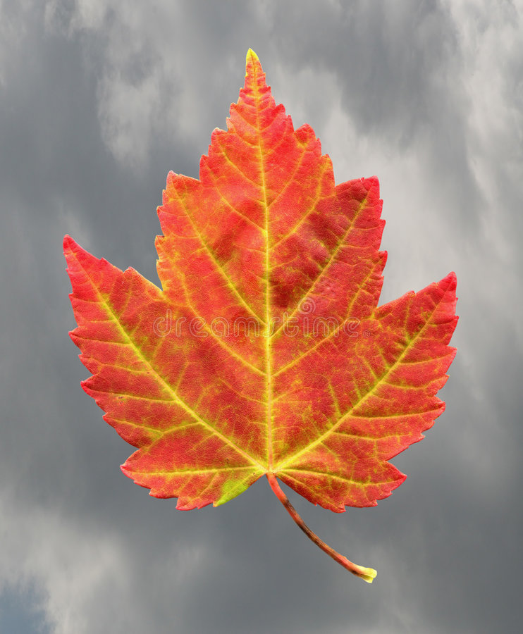Ciel nuageux de lame d'érable d'automne photos stock