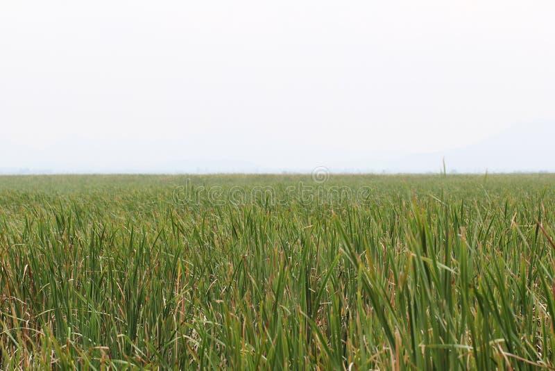 Ciel nuageux et abri parmi les milieux verts d'herbe de nature dedans tôt de la saison d'été, situation paisible, destination de  image stock