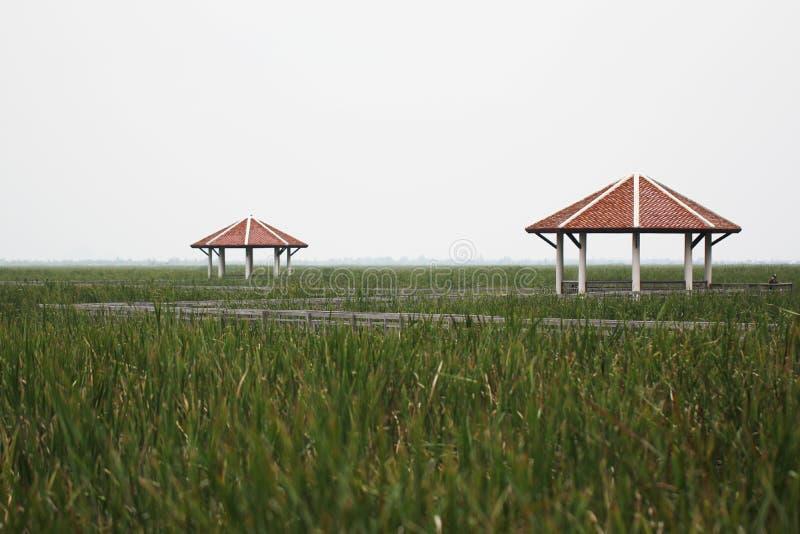 Ciel nuageux et abri parmi les milieux verts d'herbe de nature dedans tôt de la saison d'été, situation paisible, destination de  images stock