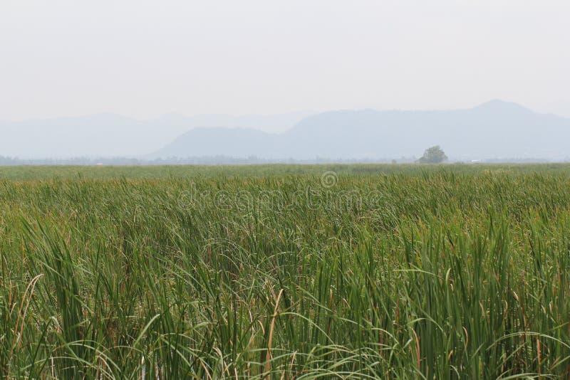Ciel nuageux et abri parmi les milieux verts d'herbe de nature dedans tôt de la saison d'été, situation paisible, destination de  photographie stock
