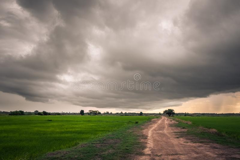 Ciel obscurci au-dessus de gisement de riz, saison des pluies image stock