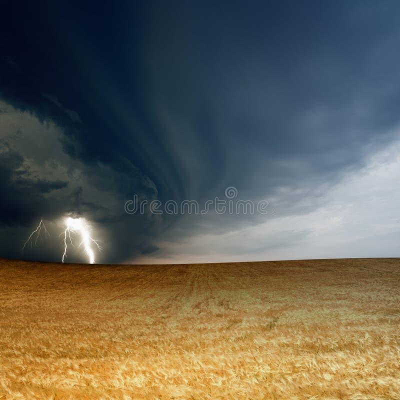Ciel orageux, orge mûre photographie stock libre de droits