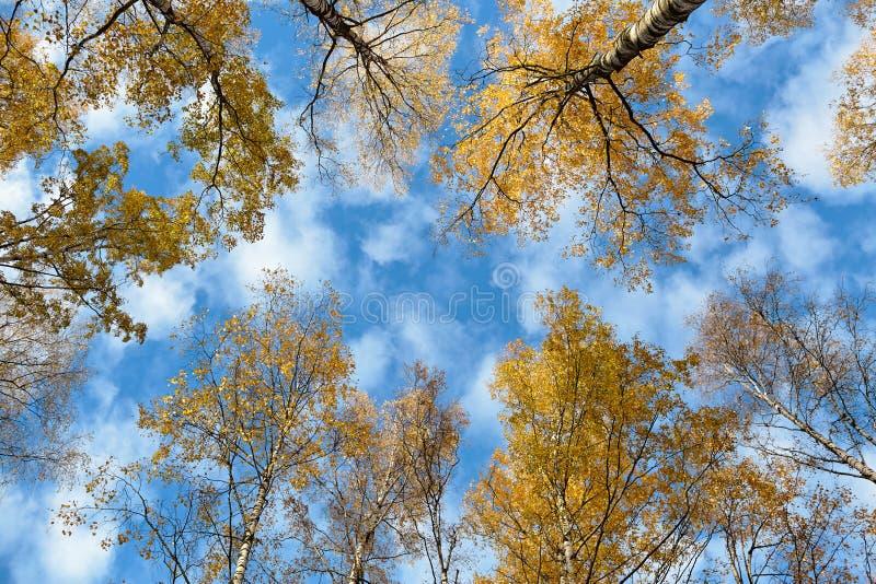 Download Ciel par les arbres image stock. Image du humeur, regard - 77159663