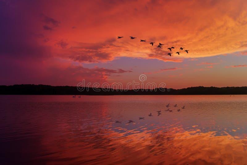 Ciel renversant de coucher du soleil réfléchi sur le lac de détente avec les oies canadiennes volant au-dessus photographie stock