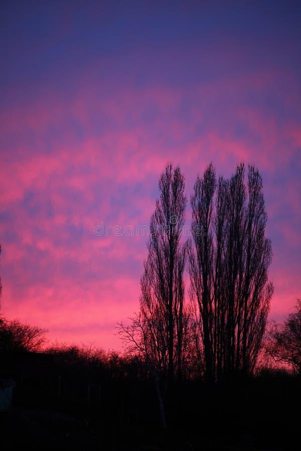 Ciel rose dramatique et coucher du soleil ou lever de soleil d'arbres photos libres de droits