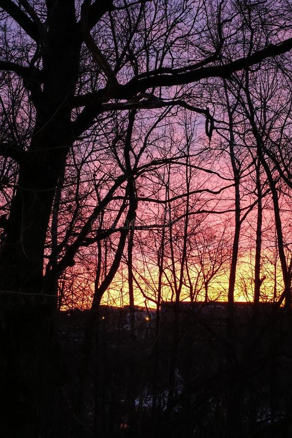 Ciel rouge violet d'aube Silhouette des arbres sans feuilles Aube tôt en mars images stock
