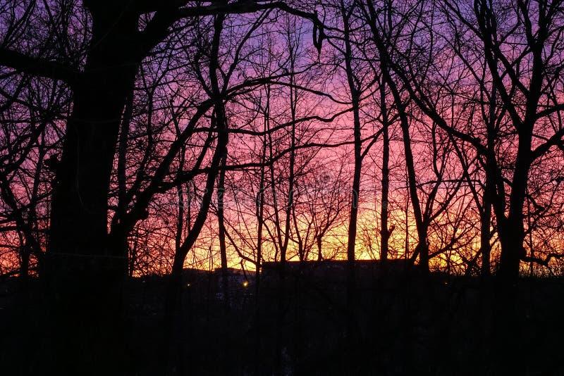 Ciel rouge violet d'aube Silhouette des arbres sans feuilles Aube tôt en mars photographie stock