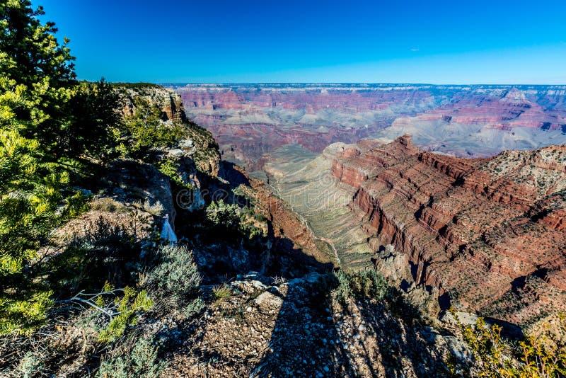 Cieli blu sopra l'orlo del sud di Grand Canyon in Arizona Con gli alberi fotografie stock libere da diritti