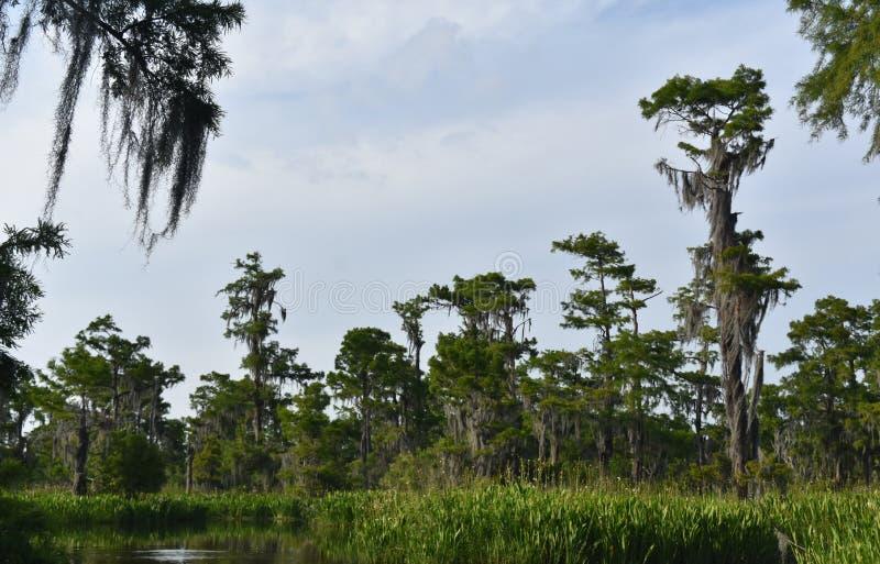 Cieli nuvolosi sopra il ramo paludoso di fiume e le zone umide della Luisiana immagine stock libera da diritti