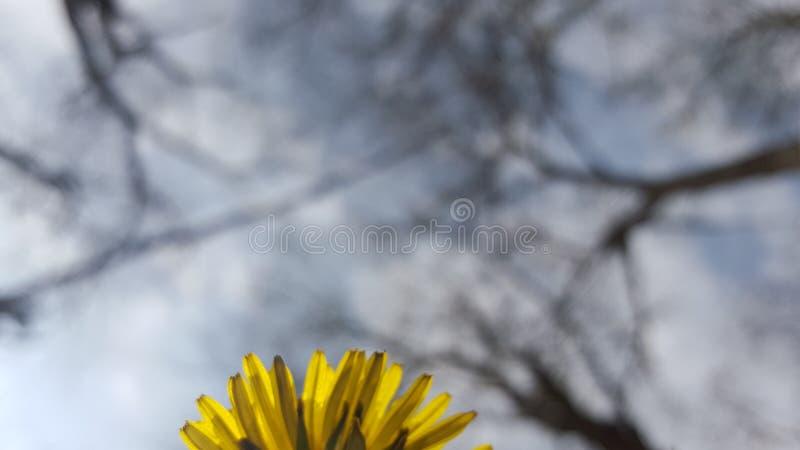 Cielo amarillo foto de archivo