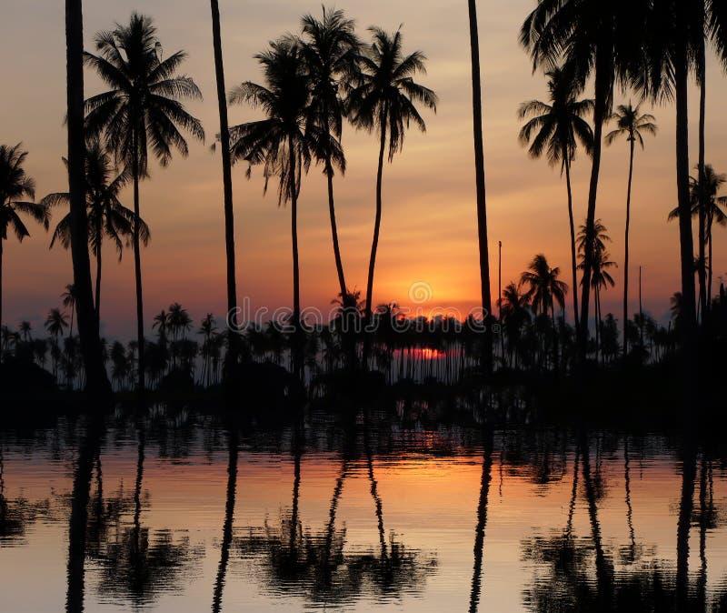 Cielo anaranjado hermoso con la nube detrás de los árboles de coco imagen de archivo libre de regalías