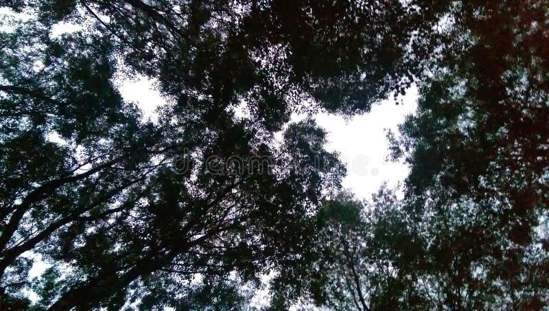 Cielo attraverso gli alberi forestali fotografie stock
