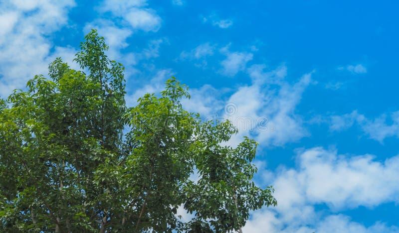 Cielo azul con árbol en el parque el día soleado foto de archivo