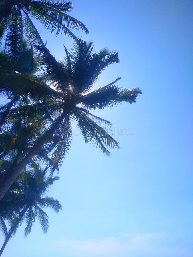 Cielo azul con el ?rbol de coco imagen de archivo libre de regalías
