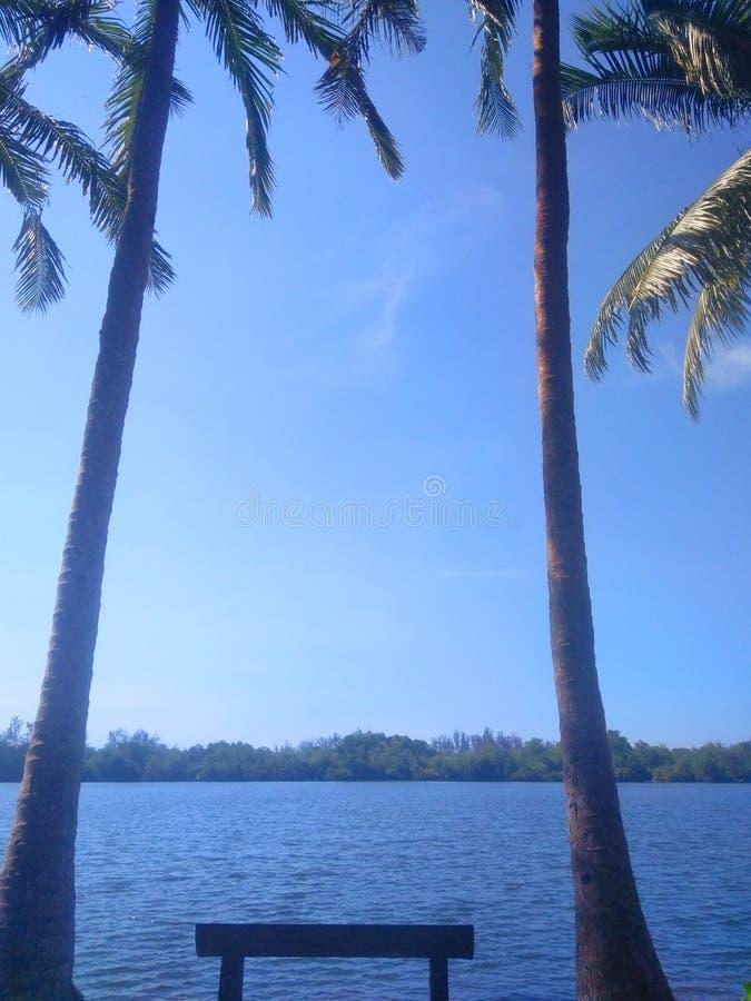 Cielo azul con el ?rbol de coco foto de archivo